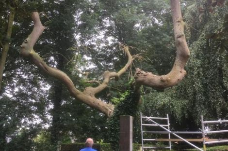 De boom op de begraafplaats